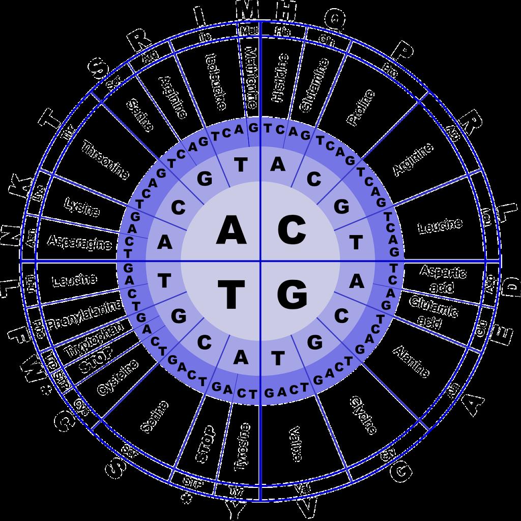 DNA opbouw